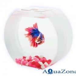 Аквариум для девочек АА-Aquarium Betta О 1,4л